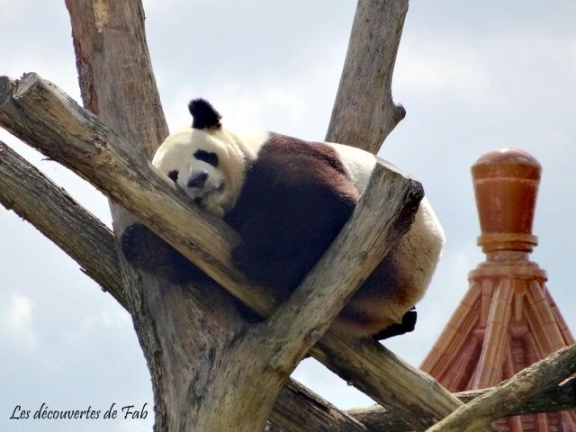 Un week-end au Zoo deBeauval