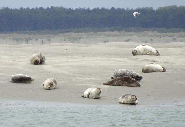 Que visiter lors d'un week-end en Baie deSomme?