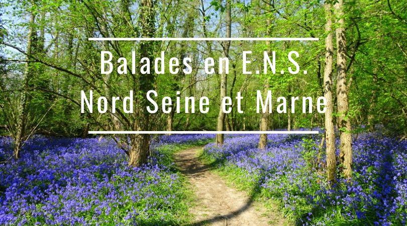 Rando et ornithologie : Instants nature en ENS du NordSeine-et-Marne
